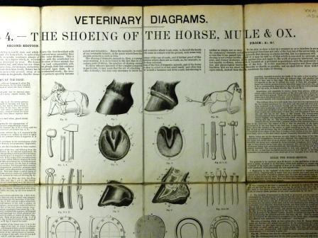Illustrations from Veterinary Diagrams in tabular form