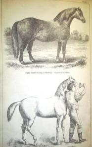Plate 1 English Cart Horse and th method of giving draughts to horses