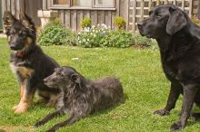 dogs-220width_jpg