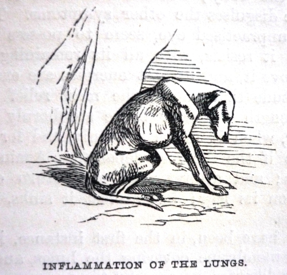 Edward Mayhew Dogs: their management - Inflammation of the lungs