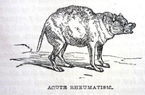 Edward Mayhew's Dogs: their management - Acute rheumatism